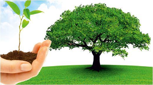 Hand und Baum